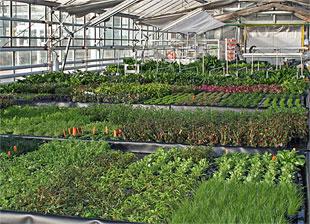 Atlantis Aquarienpflanzen - Blick in die Pflanzenhalle